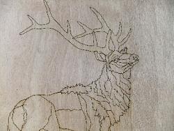 tracing an elk detailed diagram-elk1-jpg