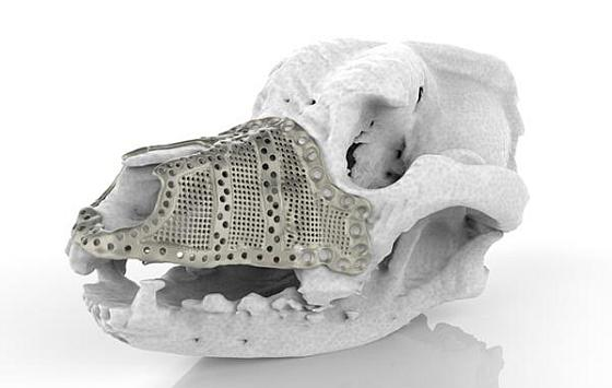 Additive manufacturing in veterinary surgery